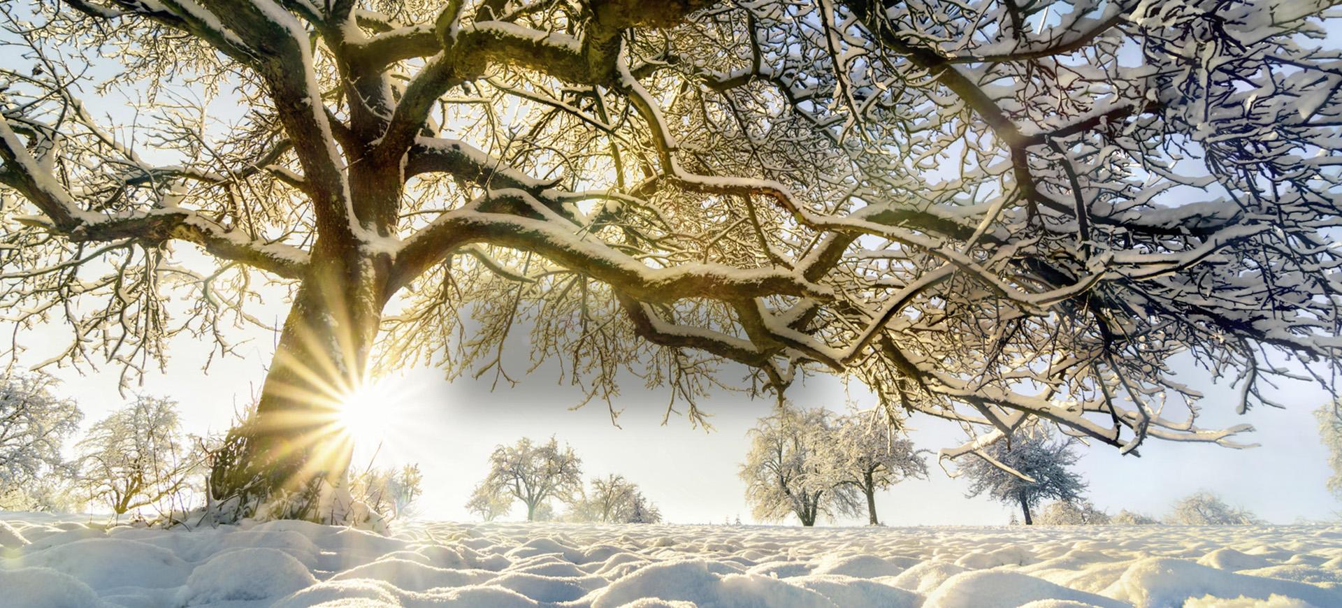Winterzauber<br />in Wildalpen!