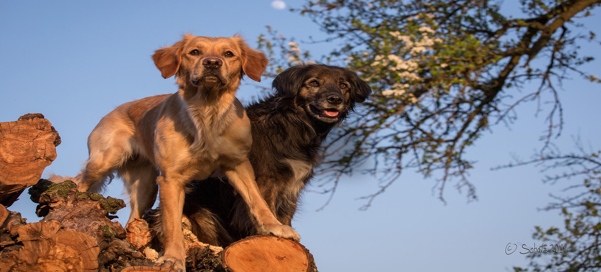 <b>Mensch und Hund - gemeinsam gesund</b>